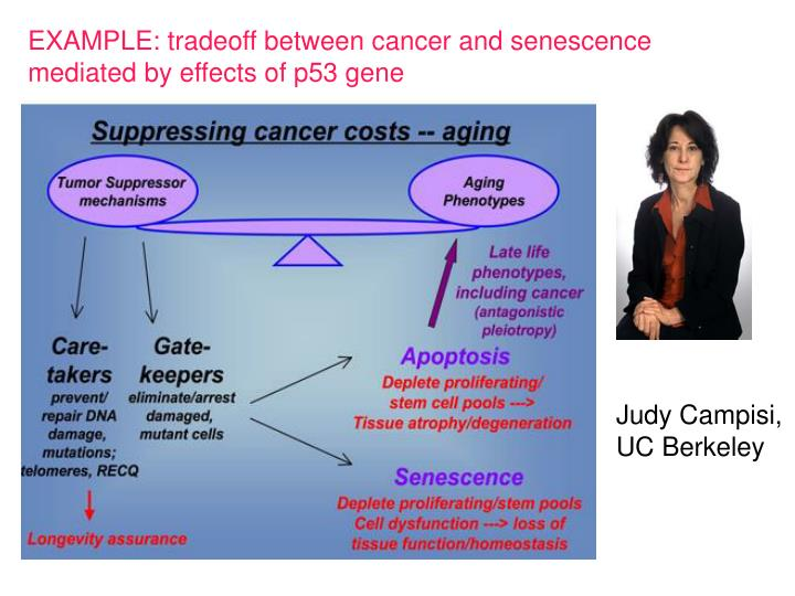 EXAMPLE: tradeoff between cancer and senescence mediated by effects of p53 gene