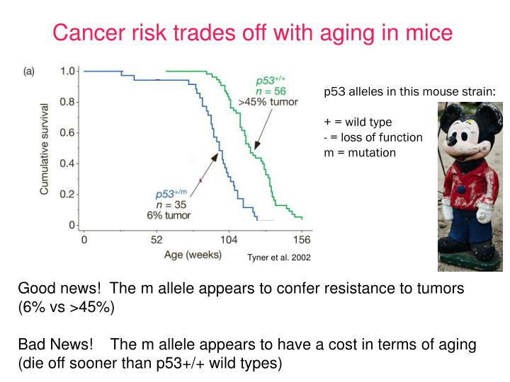 Cancer risk trades off with aging in mice