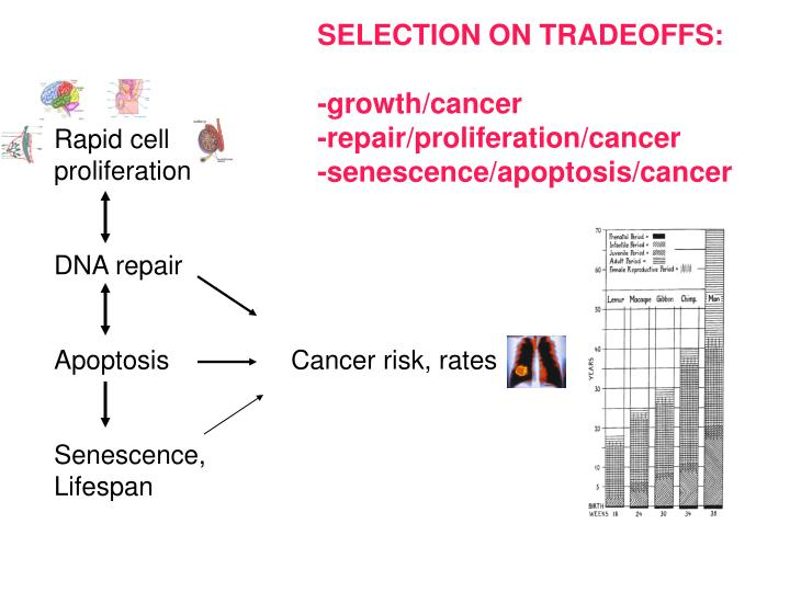 SELECTION ON TRADEOFFS: