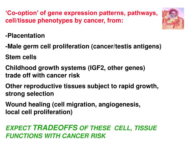 'Co-option' of gene expression patterns, pathways,