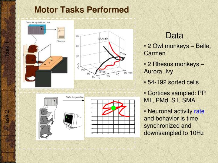 Motor Tasks Performed