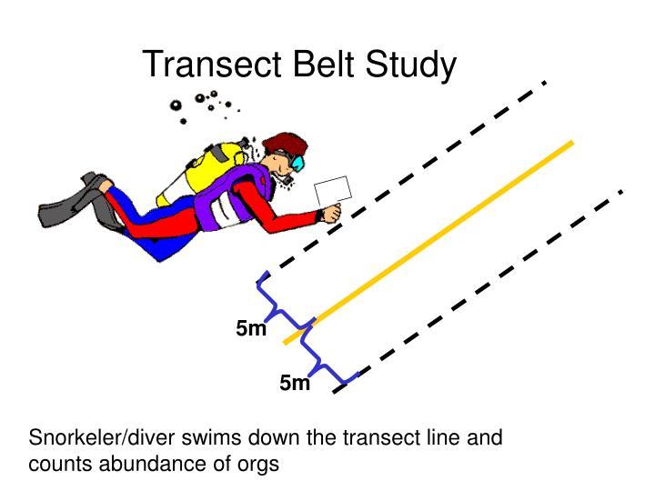 Transect Belt Study