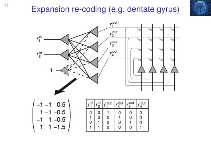 Expansion re-coding (e.g. dentate gyrus)