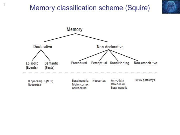 Memory classification scheme squire
