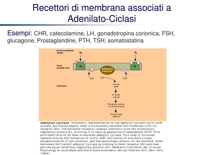 Recettori di membrana associati a Adenilato-Ciclasi