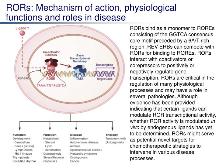 RORs: Mechanism of action, physiological functions and roles in disease