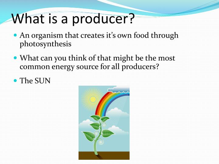 Ppt Food Chains And Food Webs Powerpoint Presentation