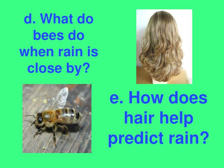 d. What do bees do when rain is close by?