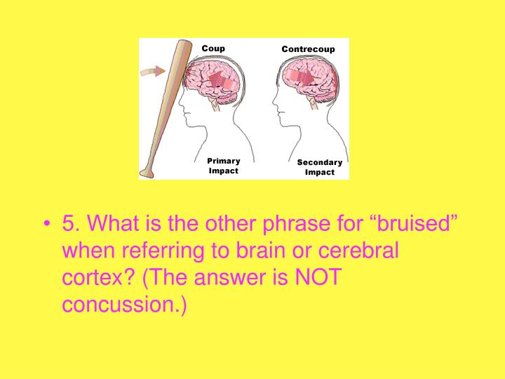 """5. What is the other phrase for """"bruised"""" when referring to brain or cerebral cortex? (The answer is NOT concussion.)"""