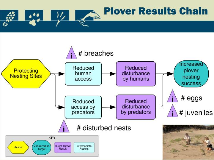 Plover Results Chain