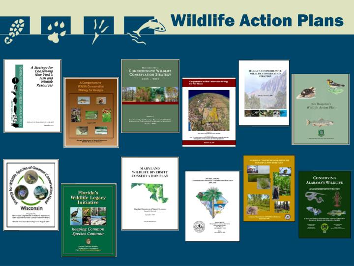 Wildlife Action Plans