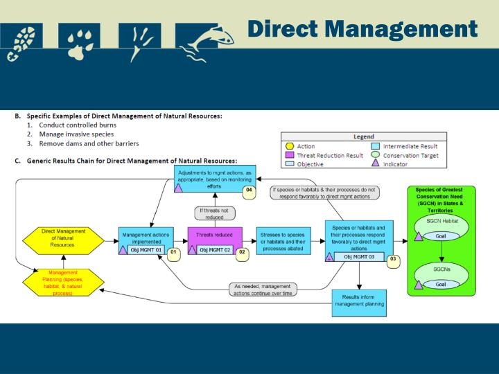 Direct Management