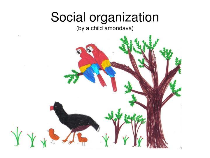 Social organization
