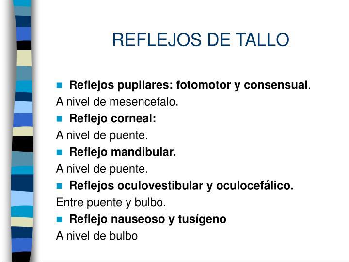 REFLEJOS DE TALLO