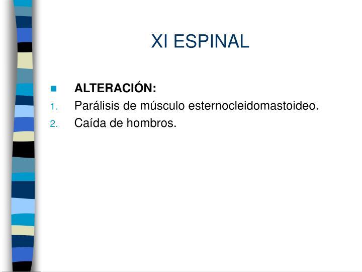XI ESPINAL