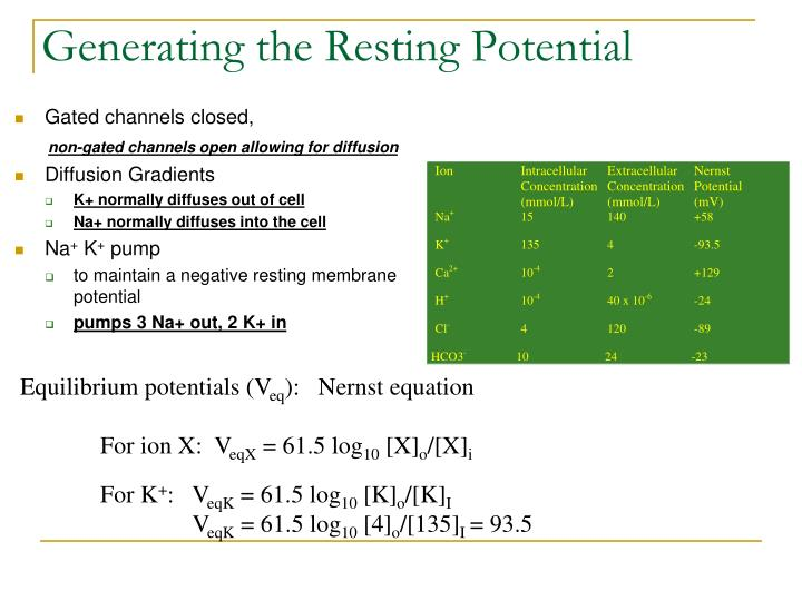 Generating the Resting Potential