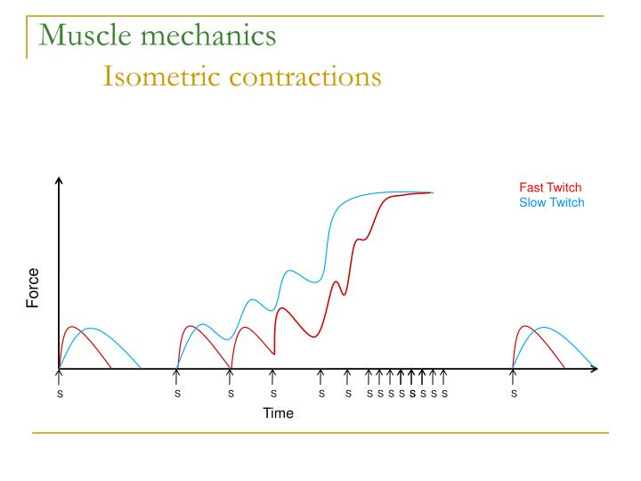 Muscle mechanics isometric contractions1