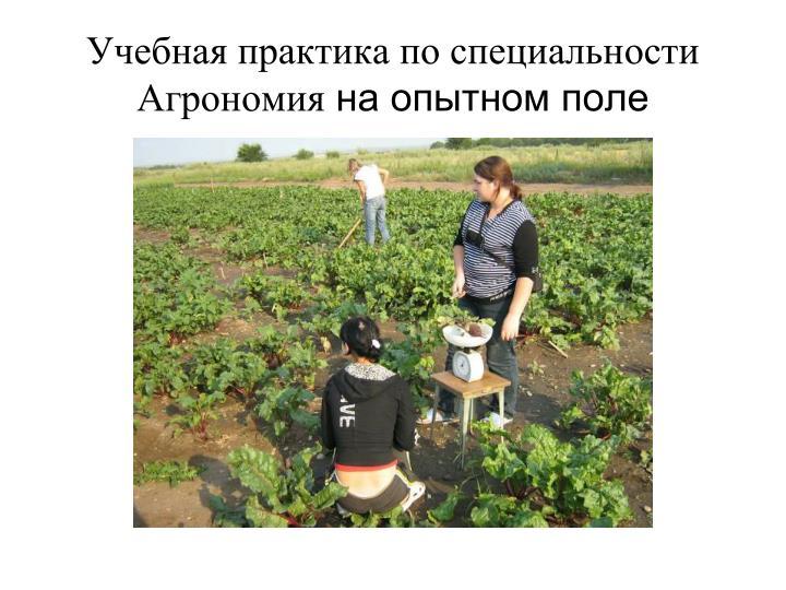Учебная практика по специальности Агрономия