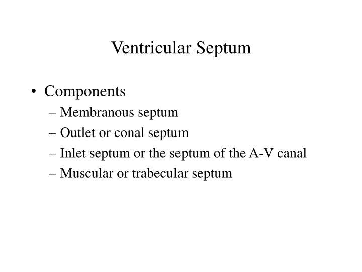Ventricular Septum