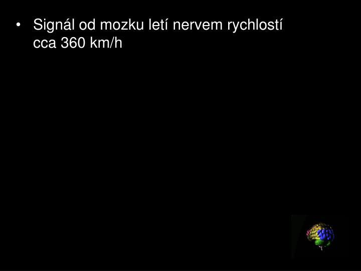Signál od mozku letí nervem rychlostí