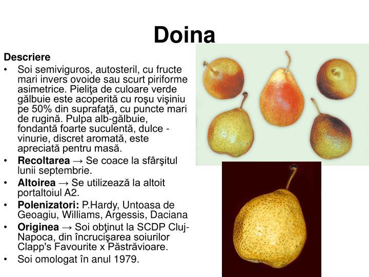Doina