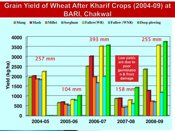 Grain Yield of Wheat After