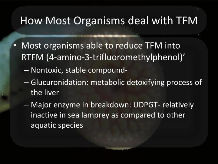 How Most Organisms deal with TFM