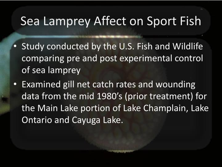 Sea Lamprey Affect on Sport Fish