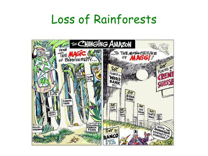 Loss of Rainforests