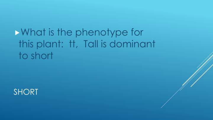 What is the phenotype for this plant:  tt,  Tall is dominant to short