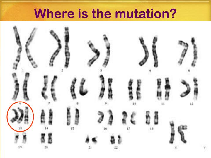 Where is the mutation?