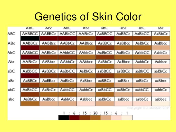 Genetics of Skin Color