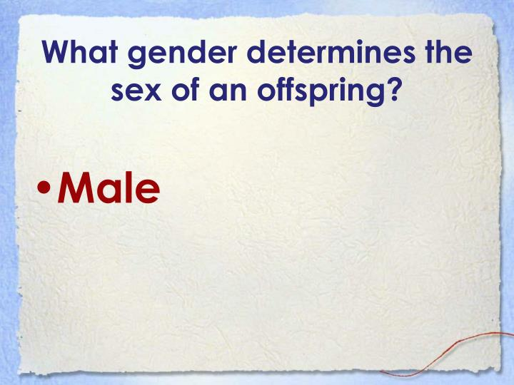 What gender determines the sex of an offspring?