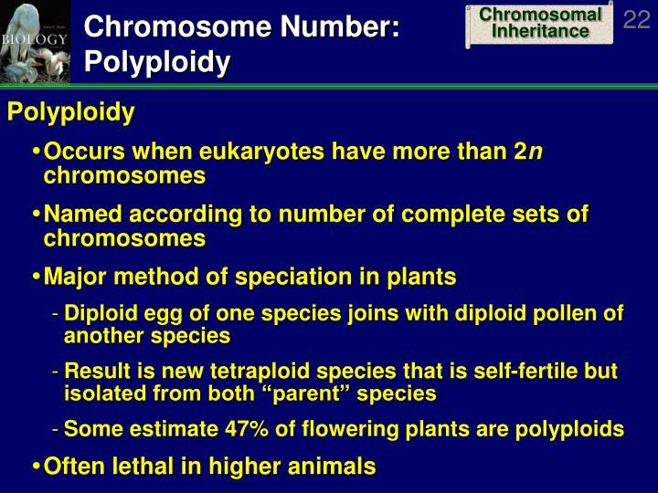 Chromosome Number: