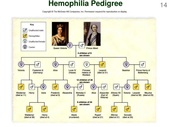 Hemophilia Pedigree