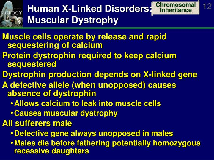 Human X-Linked Disorders: