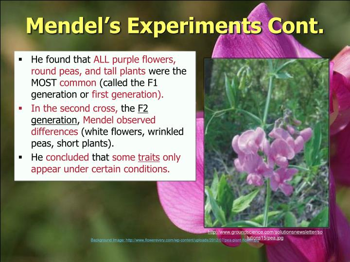 Mendel's Experiments Cont.