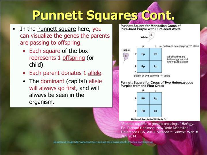 Punnett Squares Cont.