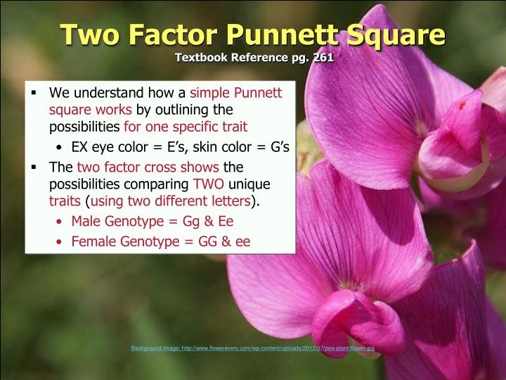 Two Factor Punnett Square