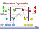 microcolumn organization