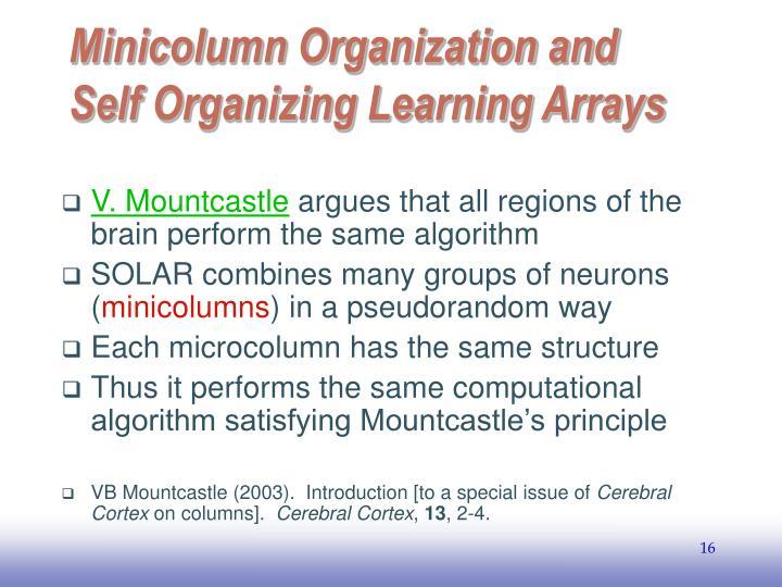 Minicolumn Organization and