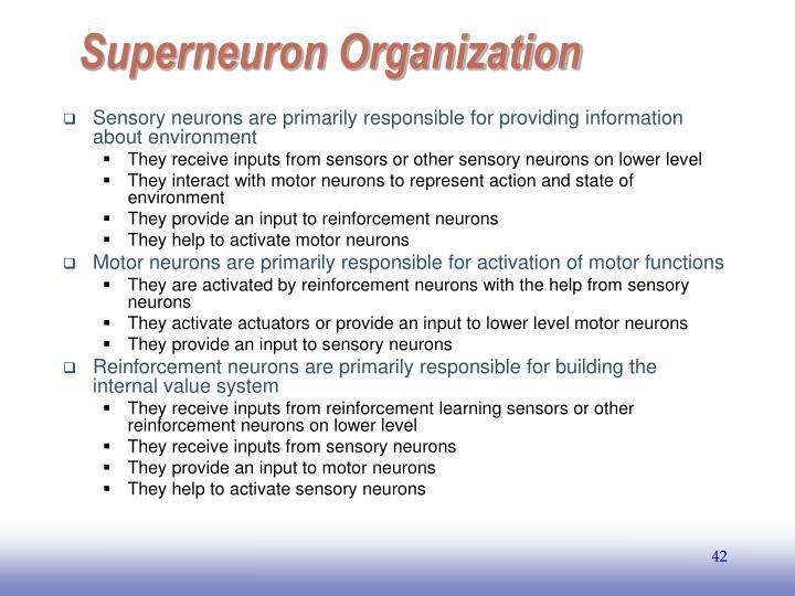Superneuron Organization