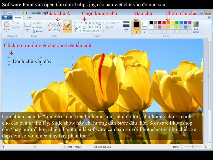 Software Paint vừa open tấm ảnh Tulips.jpg các bạn viết chữ vào đó như sau: