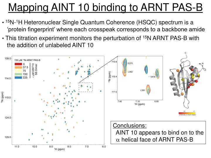 Mapping AINT 10 binding to ARNT PAS-B