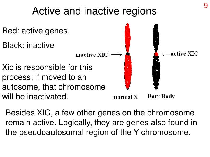 Active and inactive regions