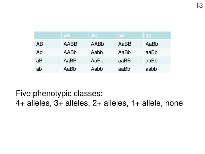 Five phenotypic classes: