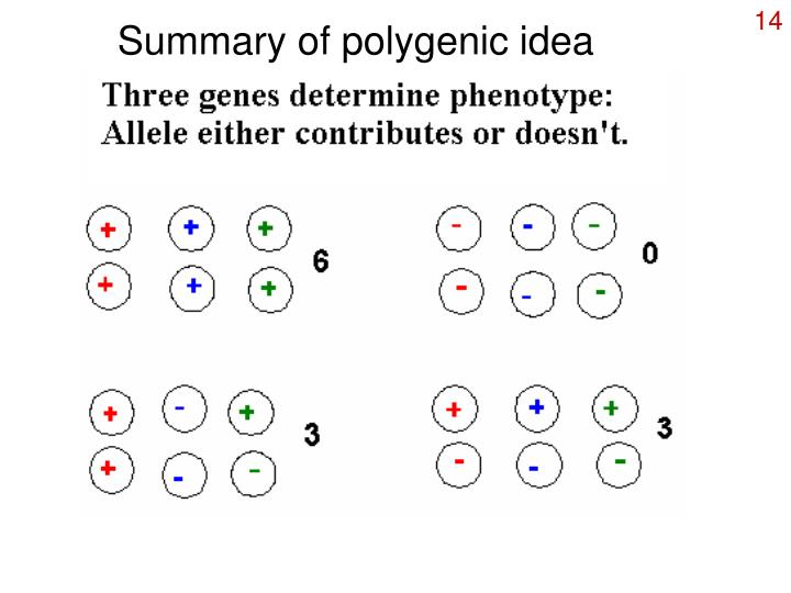 Summary of polygenic idea