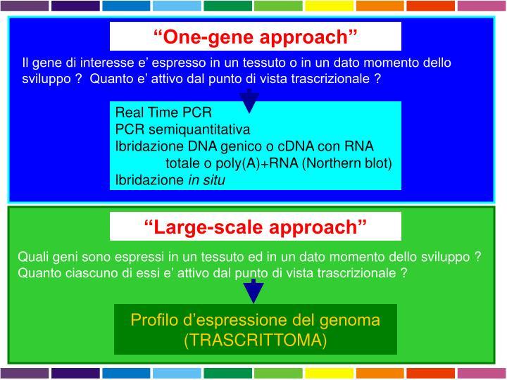 """""""One-gene approach"""""""