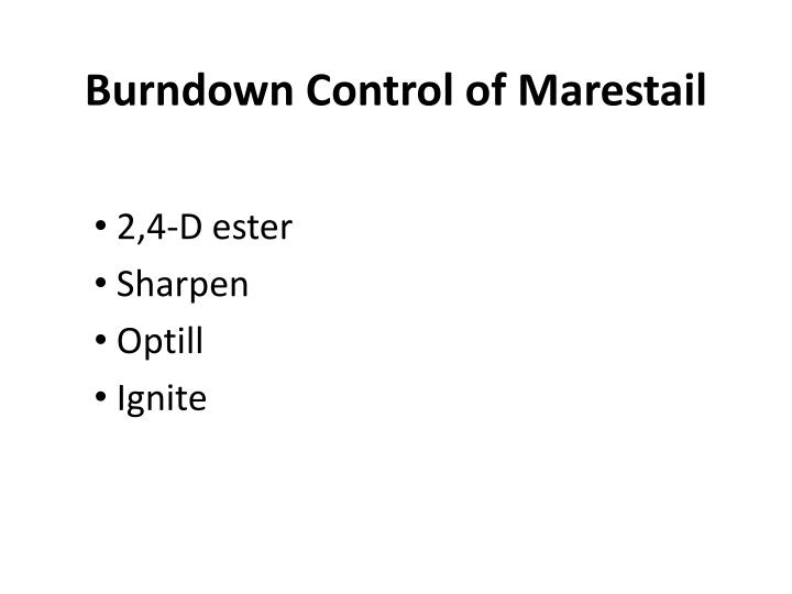 Burndown Control of Marestail