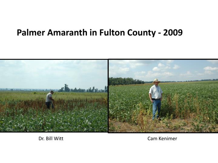 Palmer Amaranth in Fulton County - 2009